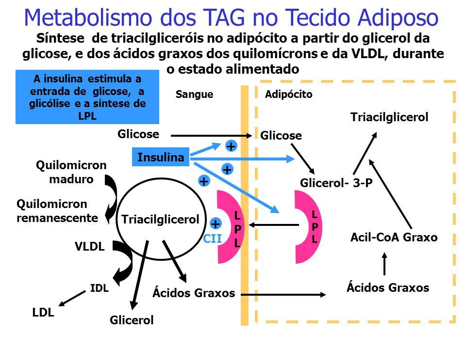 No adipócito, a adrenalina (exercício) e o glucagon (jejum, inanição, diabete não tratado) ativam, via AMPc, uma lipase hormônio-sensível, que catalis