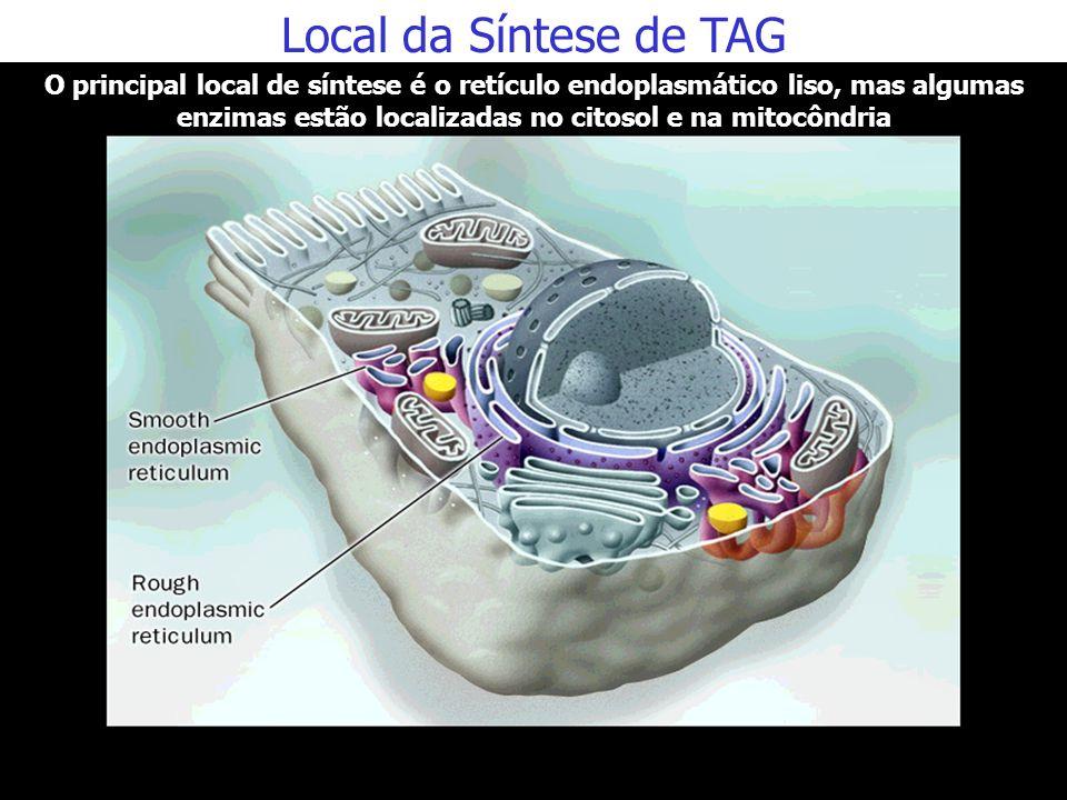 Roteiro para Estudo Local e momento metabólico da síntese de triacilgliceróis Fontes de carbonos e de energia para a síntese de triacilgliceróis no fí
