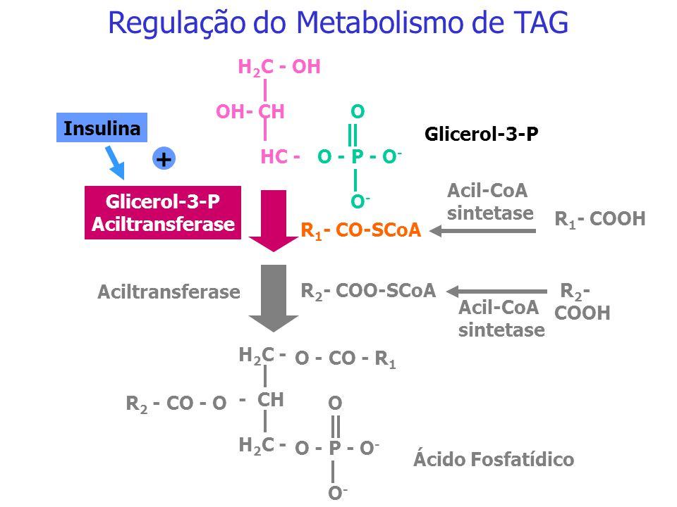 Regulação da biossíntese de ácidos graxos Acetil-CoA carboxilase P Acetil-CoA carboxilase Fosfatase PKA Insulina Adrenalina Glucagon Glicose Citrato A