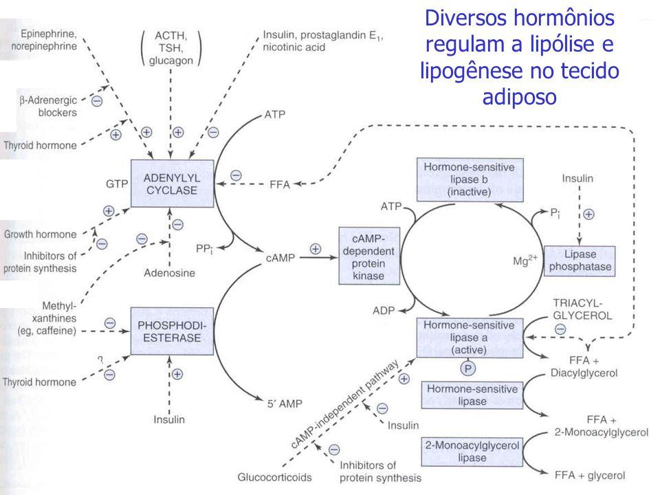 H 2 C - OH OH- CH HC - O O - P - O - O - Glicerol-3-P Aciltransferase R 1 - COOH R 2 - COOH R 1 - CO-SCoA R 2 - COO-SCoA Aciltransferase Acil-CoA sint