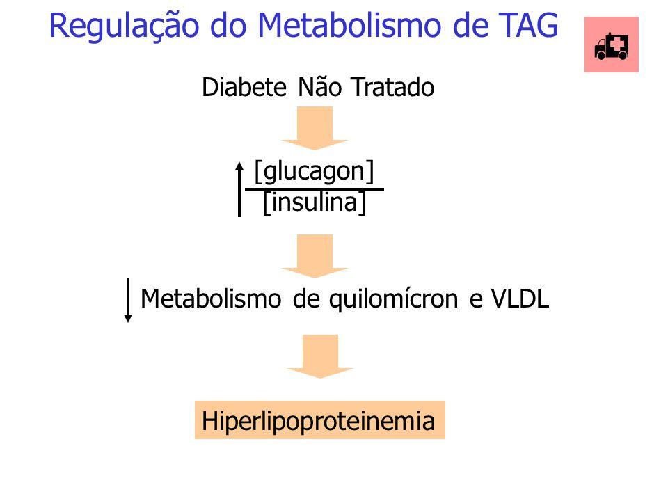 Diversos hormônios regulam a lipólise e lipogênese no tecido adiposo