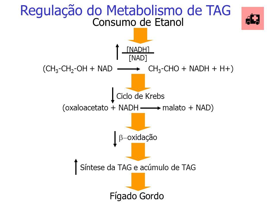 Regulação do Metabolismo de TAG  Diabete Não Tratado [glucagon] [insulina] Metabolismo de quilomícron e VLDL Hiperlipoproteinemia