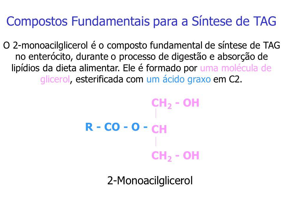 H 2 C - - CH H 2 C - O - CO - R 1 R 2 - CO - O O O - P - O - O - O ácido fosfatídico é o composto fundamental de síntese hepática e do tecido adiposo.