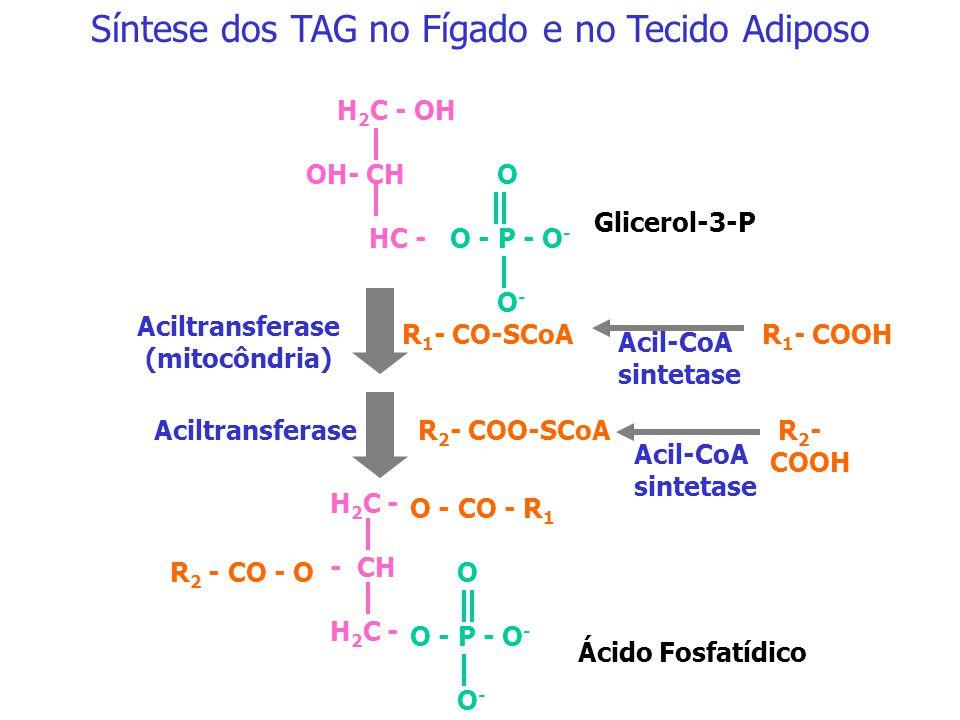 Fígado Triacilglicerol NAD NADH Dihidroxicetona-P Glicose Glicerol quinase Glicerol-3-P Fígado Tecido Adiposo ADP ATP Glicerol (metabolismo das quilom
