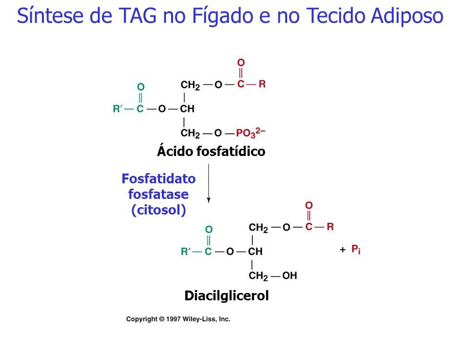 H 2 C - OH OH- CH HC - O O - P - O - O - Aciltransferase (mitocôndria) R 1 - COOH R 2 - COOH R 1 - CO-SCoA R 2 - COO-SCoAAciltransferase Acil-CoA sint