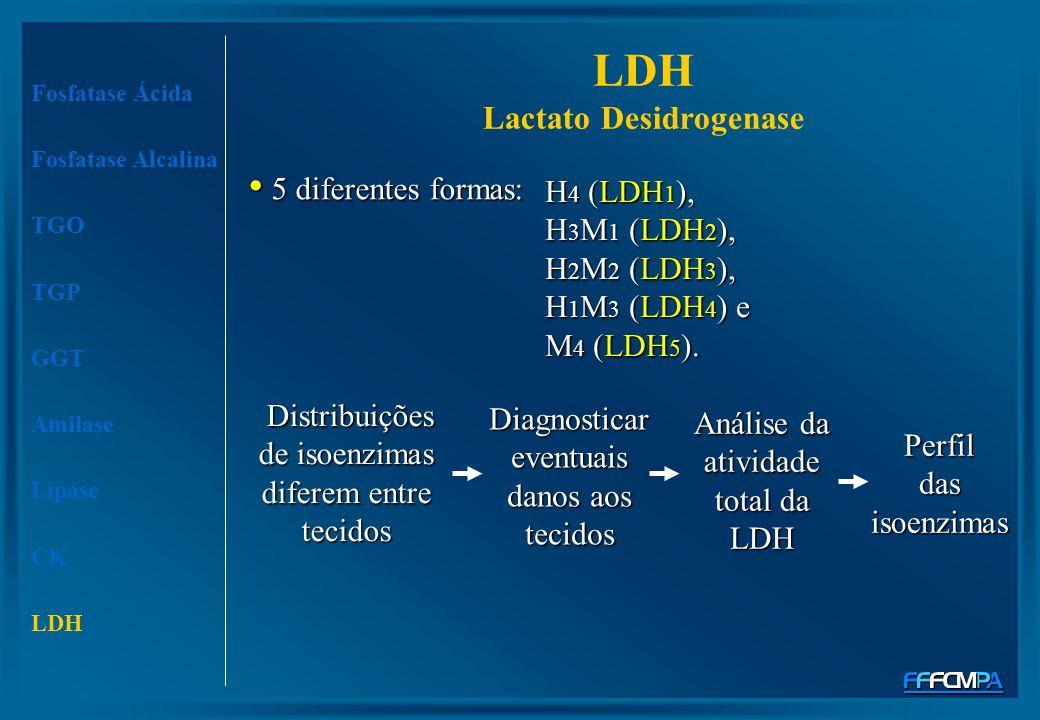 5 diferentes formas: 5 diferentes formas: Fosfatase Ácida Fosfatase Alcalina TGO TGP GGT Amilase Lipase CK LDH Distribuições de isoenzimas diferem ent