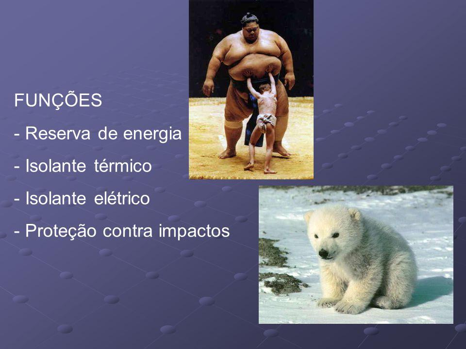 PREVENÇÃO 2 - Mantenha um peso adequado - evite os excessos.