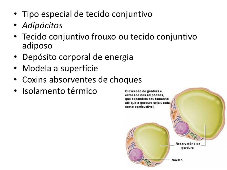Tipo especial de tecido conjuntivo Adipócitos Tecido conjuntivo frouxo ou tecido conjuntivo adiposo Depósito corporal de energia Modela a superfície Coxins absorventes de choques Isolamento térmico