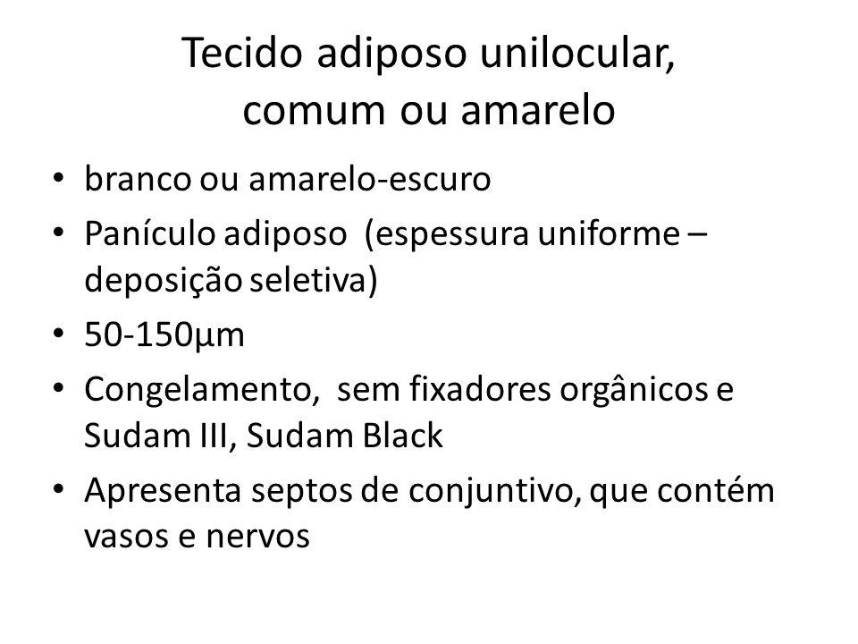 Tecido adiposo unilocular, comum ou amarelo Deposição e mobilização dos lipídios Ácido graxos glicerol