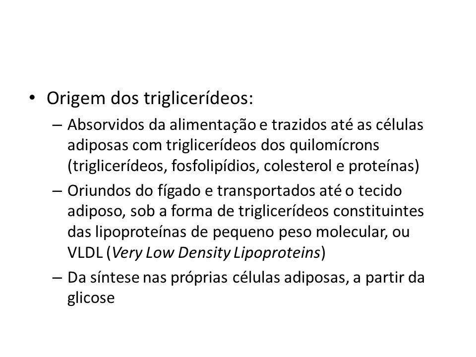 Origem dos triglicerídeos: – Absorvidos da alimentação e trazidos até as células adiposas com triglicerídeos dos quilomícrons (triglicerídeos, fosfoli