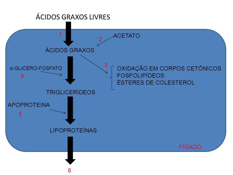 ÁCIDOS GRAXOS LIVRES ÁCIDOS GRAXOS ACETATO OXIDAÇÃO EM CORPOS CETÔNICOS FOSFOLIPÍDEOS ÉSTERES DE COLESTEROL TRIGLICERÍDEOS LIPOPROTEÍNAS APOPROTEINA α
