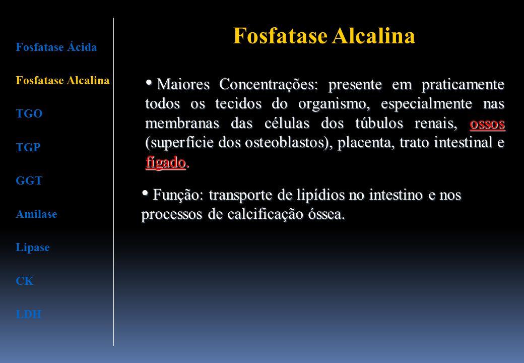 Fosfatase Alcalina Maiores Concentrações: presente em praticamente todos os tecidos do organismo, especialmente nas membranas das células dos túbulos