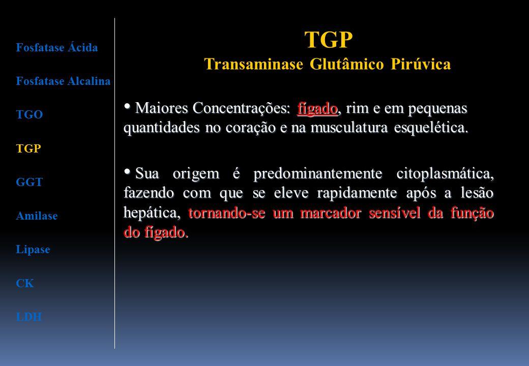TGP Transaminase Glutâmico Pirúvica Maiores Concentrações: fígado, rim e em pequenas quantidades no coração e na musculatura esquelética. Maiores Conc