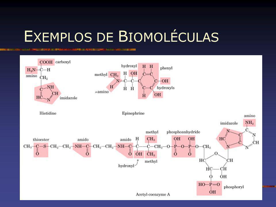 E XEMPLOS DE B IOMOLÉCULAS