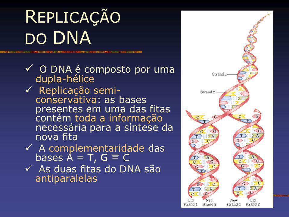 R EPLICAÇÃO DO DNA O DNA é composto por uma dupla-hélice Replicação semi- conservativa: as bases presentes em uma das fitas contém toda a informação n