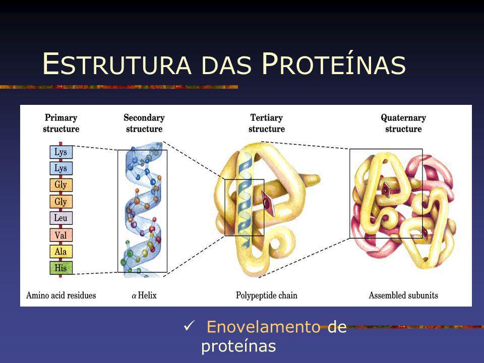 E STRUTURA DAS P ROTEÍNAS Enovelamento de proteínas