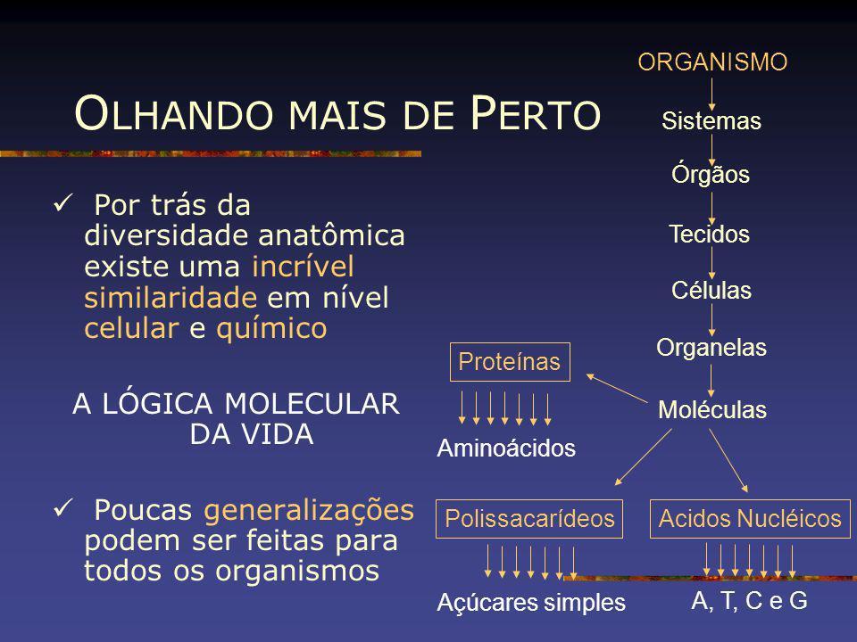 O LHANDO MAIS DE P ERTO Por trás da diversidade anatômica existe uma incrível similaridade em nível celular e químico A LÓGICA MOLECULAR DA VIDA Pouca