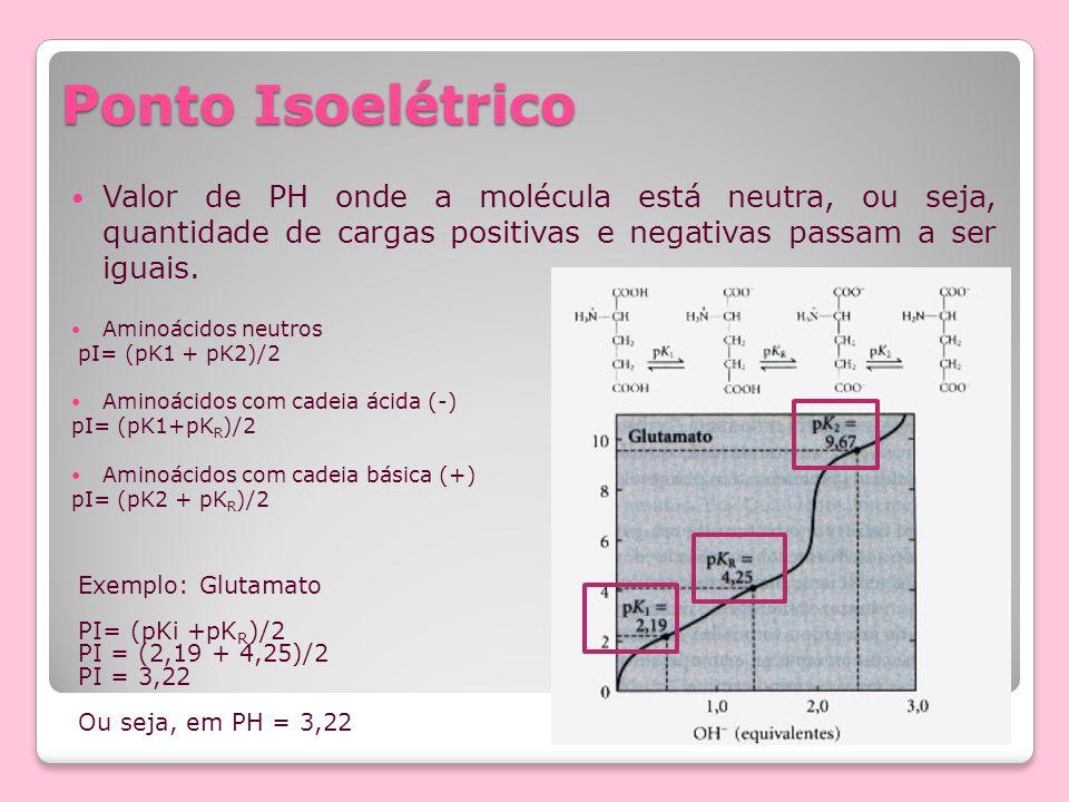 Ponto Isoelétrico Valor de PH onde a molécula está neutra, ou seja, quantidade de cargas positivas e negativas passam a ser iguais. Aminoácidos neutro