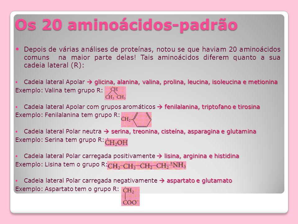 Os 20 aminoácidos-padrão Depois de várias análises de proteínas, notou se que haviam 20 aminoácidos comuns na maior parte delas! Tais aminoácidos dife