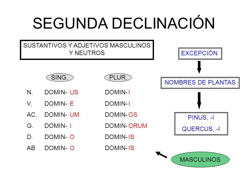 SEGUNDA DECLINACIÓN SUSTANTIVOS Y ADJETIVOS MASCULINOS Y NEUTROS EXCEPCIÓN NOMBRES DE PLANTAS N.