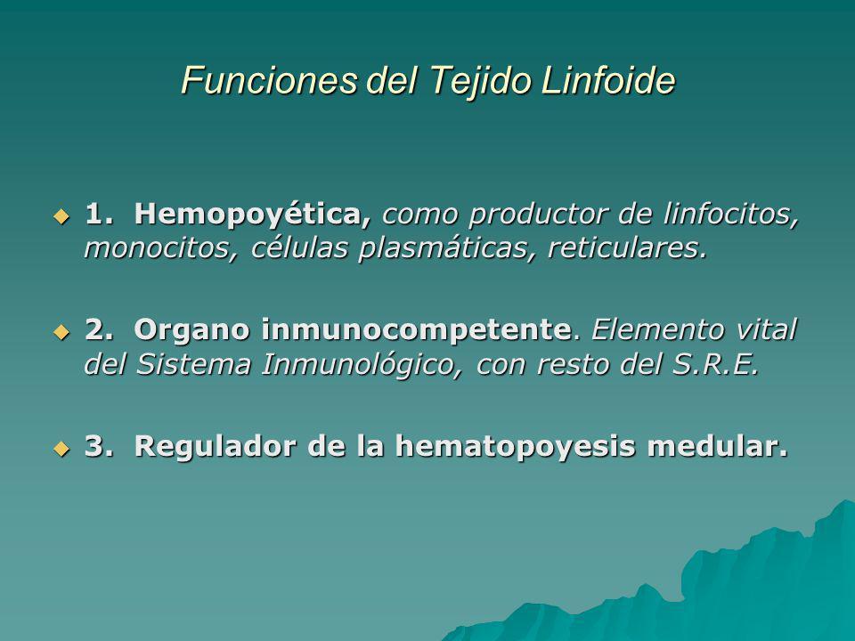 Funciones del Tejido Linfoide 1. Hemopoyética, como productor de linfocitos, monocitos, células plasmáticas, reticulares. 1. Hemopoyética, como produc