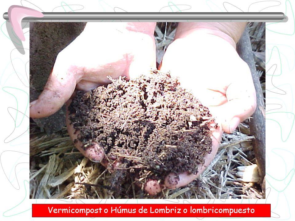 Diferentes estudos afirmam que um grama de húmus de minhoca contem ao redor de 2 bilhões de bactérias.