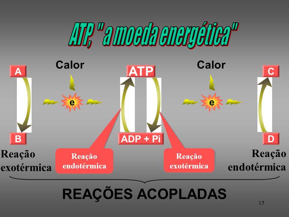 15 A B ADP + Pi ATP Reação endotérmica Reação exotérmica C D e Calor e REAÇÕES ACOPLADAS Reação exotérmica Reação endotérmica