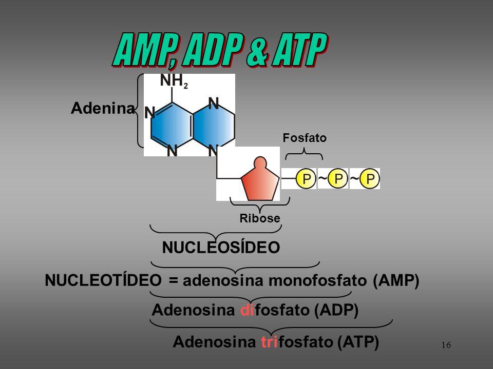16 NUCLEOSÍDEO NUCLEOTÍDEO = adenosina monofosfato (AMP)Adenosina difosfato (ADP) Adenosina trifosfato (ATP) Adenina Fosfato Ribose