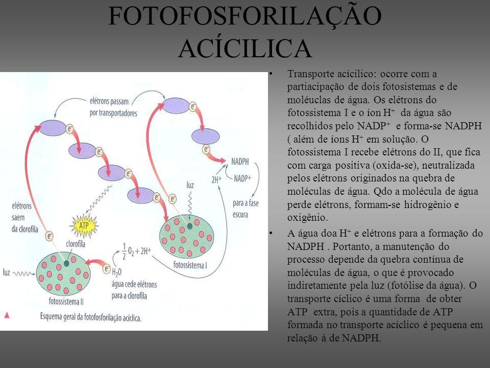 FOTOFOSFORILAÇÃO ACÍCILICA Transporte acícilico: ocorre com a partiacipação de dois fotosistemas e de moléuclas de água. Os elétrons do fotossistema I