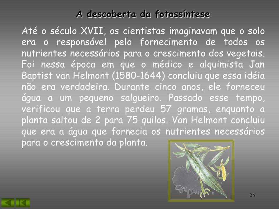 25 A descoberta da fotossíntese Até o século XVII, os cientistas imaginavam que o solo era o responsável pelo fornecimento de todos os nutrientes nece