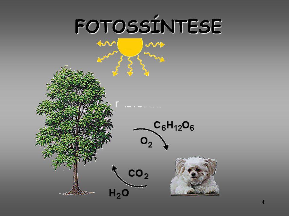 5 fotossíntese Todo ser vivo precisa de energia para continuar existindo.