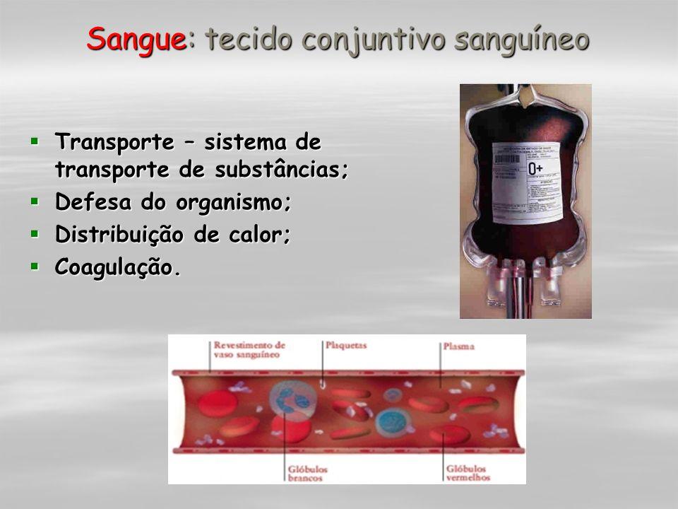 Sangue: tecido conjuntivo sanguíneo Transporte – sistema de transporte de substâncias; Transporte – sistema de transporte de substâncias; Defesa do or
