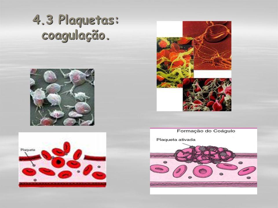 4.3 Plaquetas: coagulação.