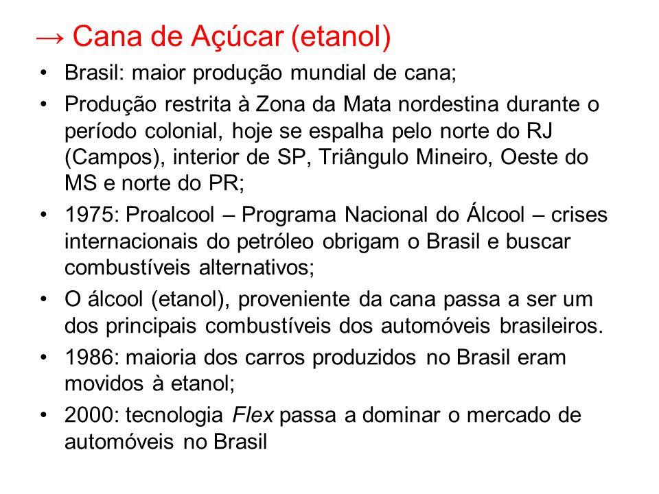 Cana de Açúcar (etanol) Brasil: maior produção mundial de cana; Produção restrita à Zona da Mata nordestina durante o período colonial, hoje se espalh