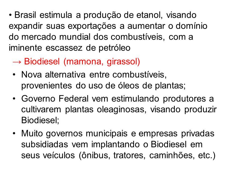 Brasil estimula a produção de etanol, visando expandir suas exportações a aumentar o domínio do mercado mundial dos combustíveis, com a iminente escas