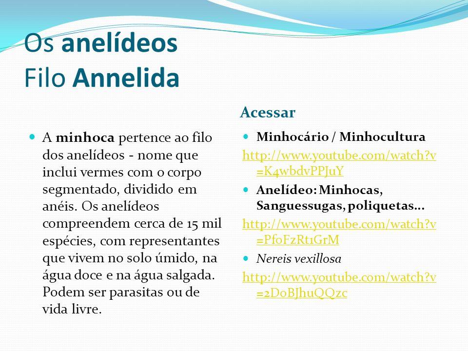 Os anelídeos Filo Annelida Acessar A minhoca pertence ao filo dos anelídeos - nome que inclui vermes com o corpo segmentado, dividido em anéis. Os ane