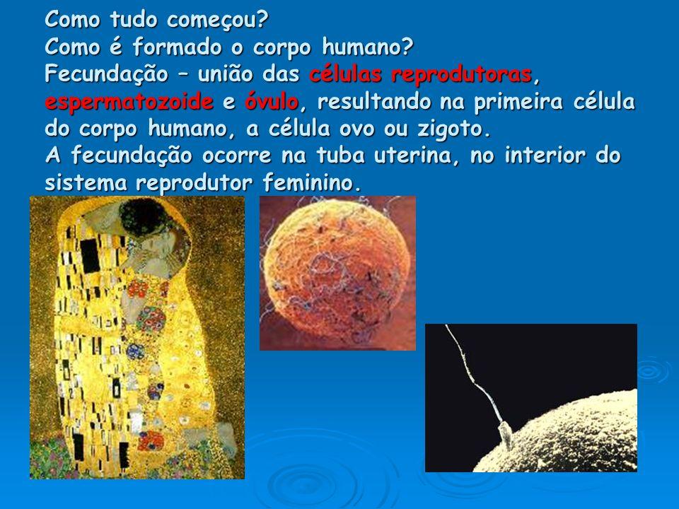 Como tudo começou? Como é formado o corpo humano? Fecundação – união das células reprodutoras, espermatozoide e óvulo, resultando na primeira célula d