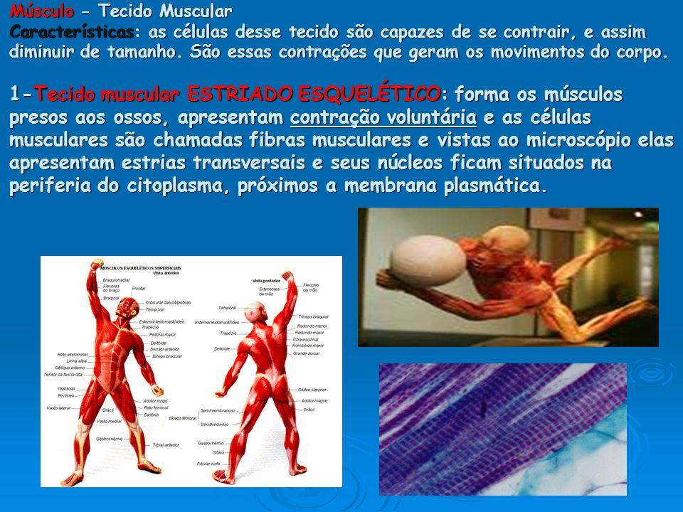 Músculo - Tecido Muscular Características: as células desse tecido são capazes de se contrair, e assim diminuir de tamanho. São essas contrações que g