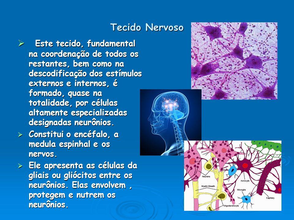 Tecido Nervoso Este tecido, fundamental na coordenação de todos os restantes, bem como na descodificação dos estímulos externos e internos, é formado,