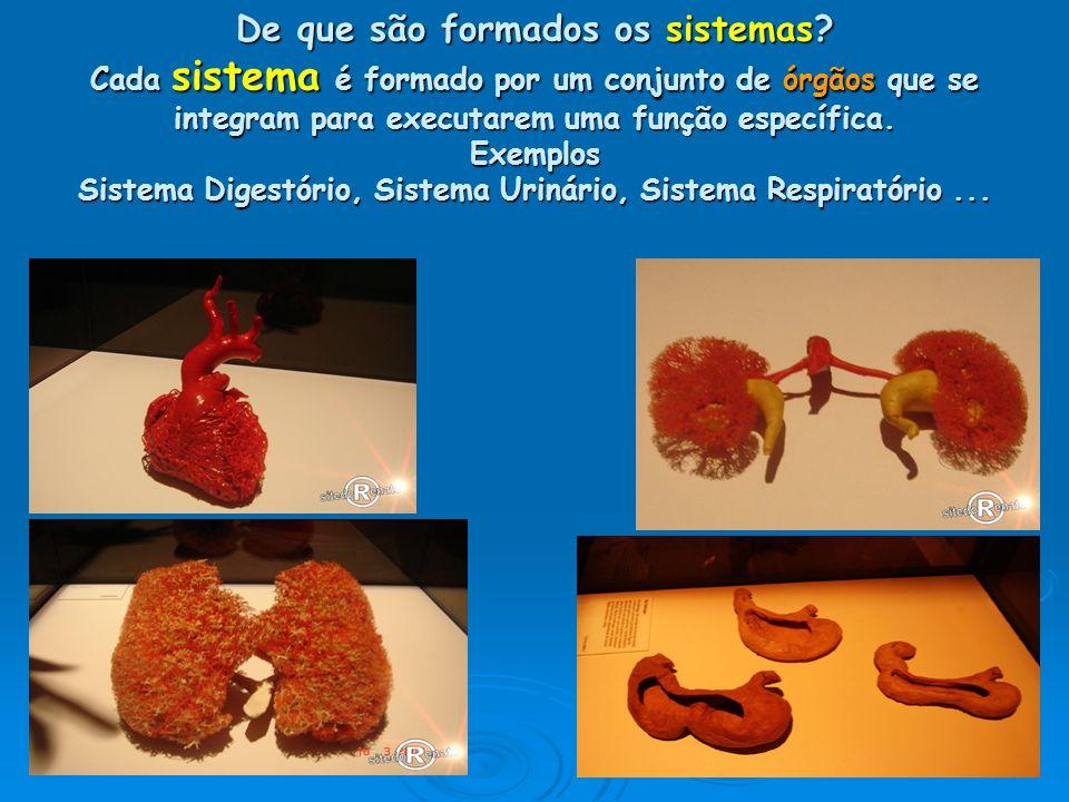 De que são formados os sistemas? Cada sistema é formado por um conjunto de órgãos que se integram para executarem uma função específica. Exemplos Sist