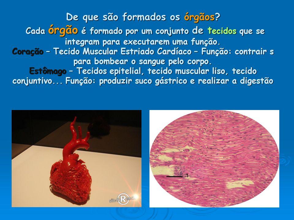 De que são formados os órgãos? Cada órgão é formado por um conjunto de t ecidos que se integram para executarem uma função. Coração – Tecido Muscular