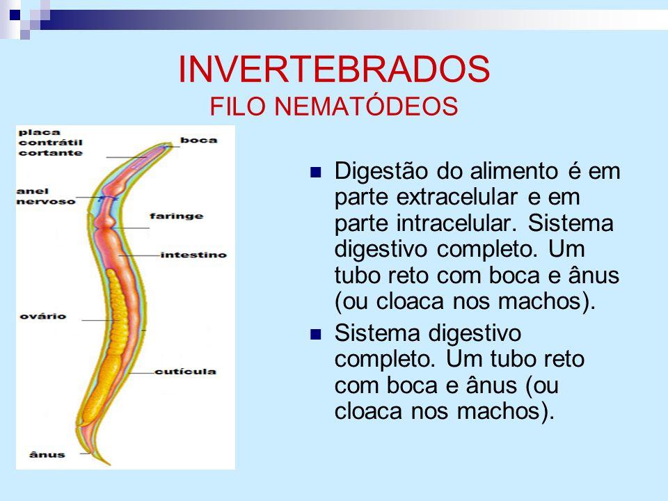 INVERTEBRADOS FILO NEMATÓDEOS Digestão do alimento é em parte extracelular e em parte intracelular. Sistema digestivo completo. Um tubo reto com boca