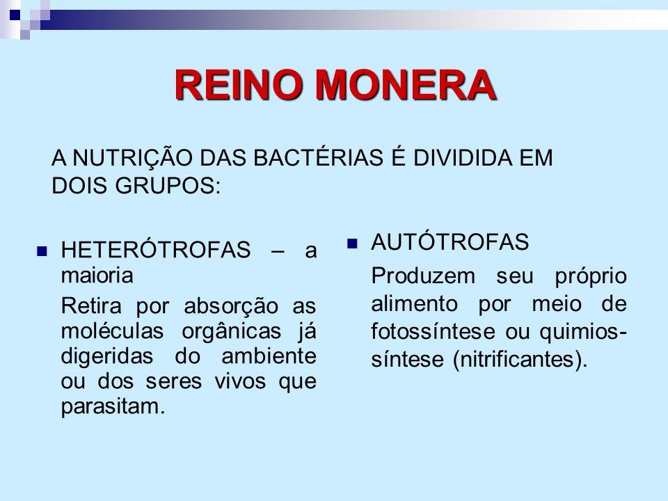 REINO MONERA HETERÓTROFAS – a maioria Retira por absorção as moléculas orgânicas já digeridas do ambiente ou dos seres vivos que parasitam. AUTÓTROFAS