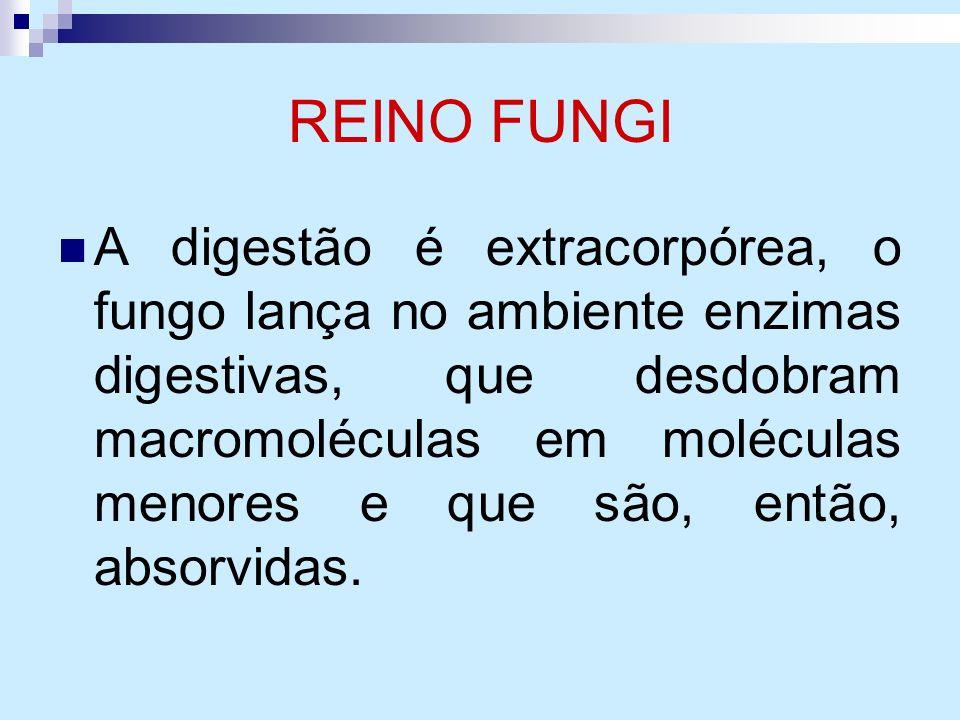 REINO FUNGI A digestão é extracorpórea, o fungo lança no ambiente enzimas digestivas, que desdobram macromoléculas em moléculas menores e que são, ent