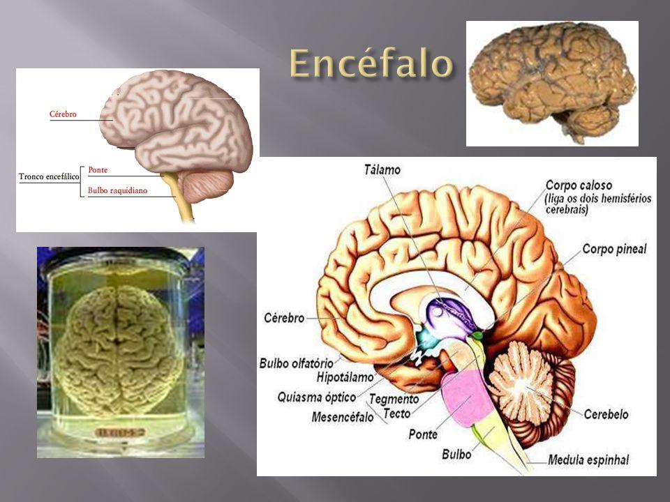 Explicação: O lado direito do vosso cérebro tenta dizer a cor, enquanto que o lado esquerdo insiste em ler a palavra!