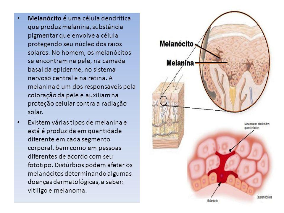 Melanócito é uma célula dendrítica que produz melanina, substância pigmentar que envolve a célula protegendo seu núcleo dos raios solares. No homem, o