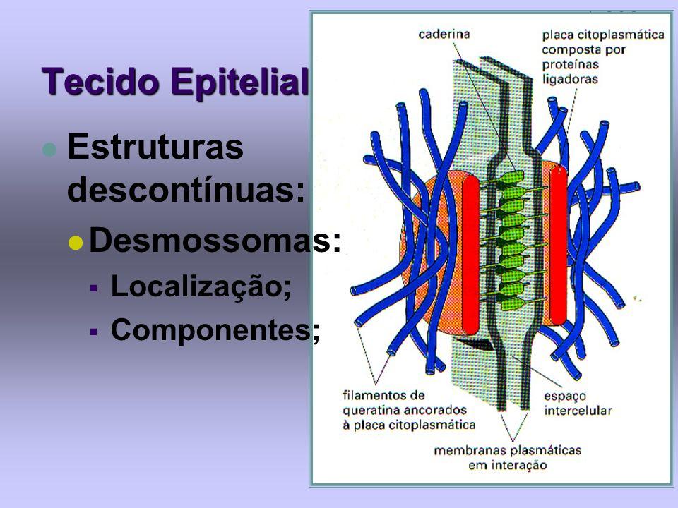 Tecido Epitelial Estruturas descontínuas: Desmossomas: Localização; Componentes;
