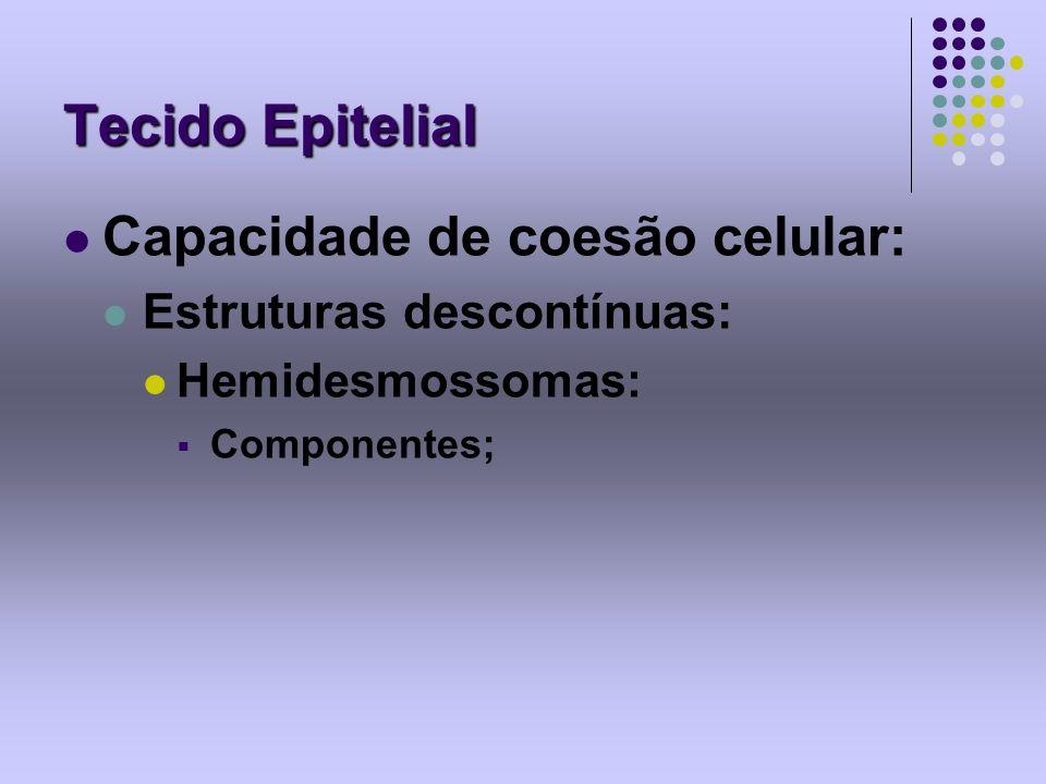 Tecido Epitelial Capacidade de coesão celular: Estruturas descontínuas: Hemidesmossomas: Componentes;