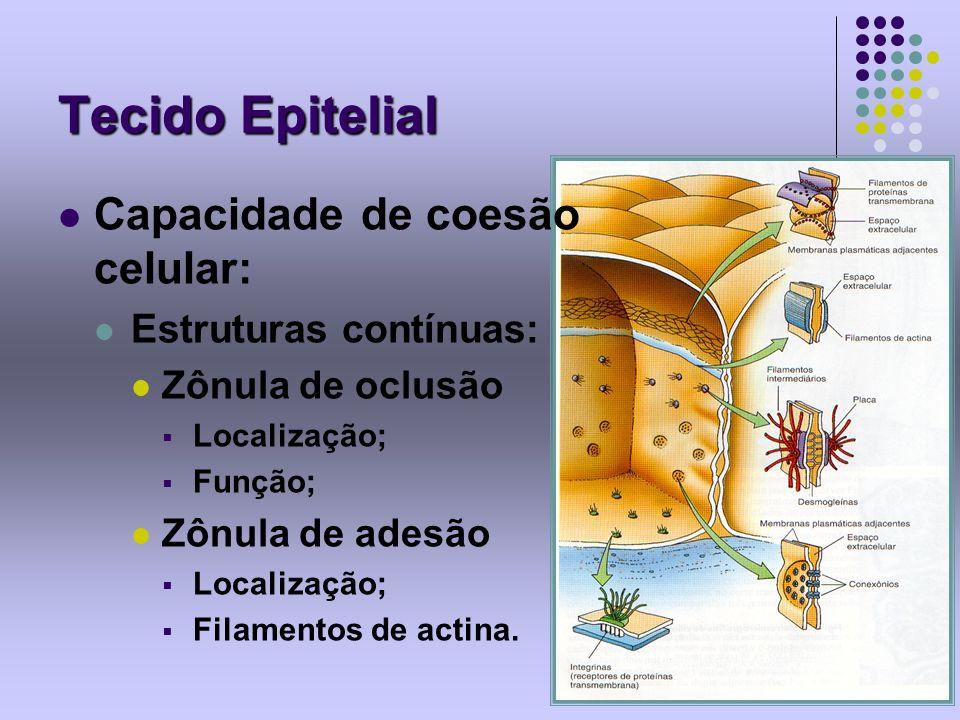 Tecido Epitelial Capacidade de coesão celular: Estruturas contínuas: Zônula de oclusão Localização; Função; Zônula de adesão Localização; Filamentos d