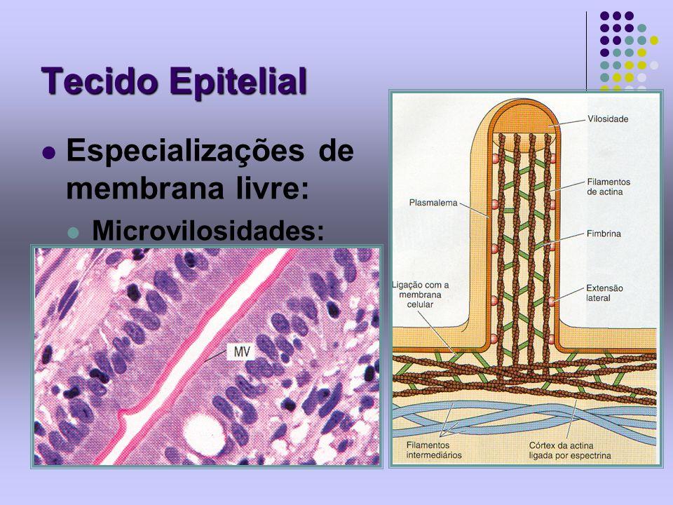 Tecido Epitelial Especializações de membrana livre: Microvilosidades: